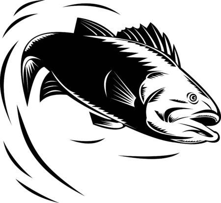fish jumping: bass jumping Stock Photo
