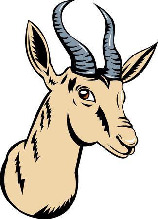 springbok: springbok or antelope head Stock Photo