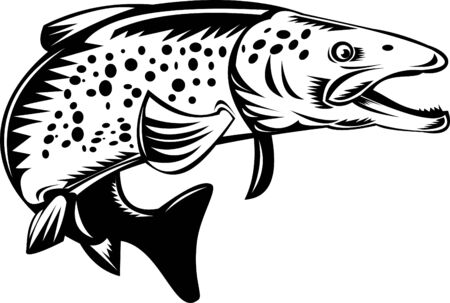 speckled trout: spotted trout jumping Stock Photo