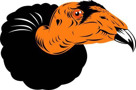 condor: vulture or condor Stock Photo