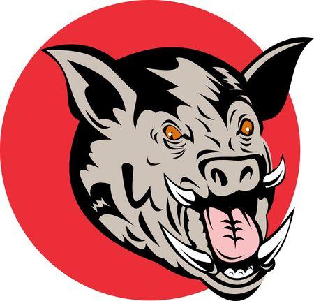 jabali: Razorback o cerdo salvaje