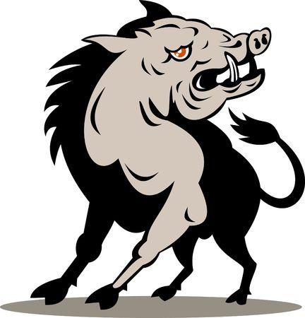 jabali: Razorback o cerdo salvaje a punto de atacar