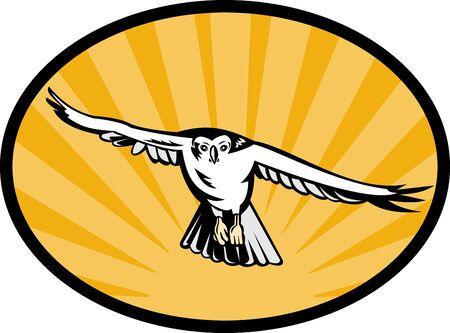azor: Ilustraci�n de un ave de Azor pasearse hacia abajo