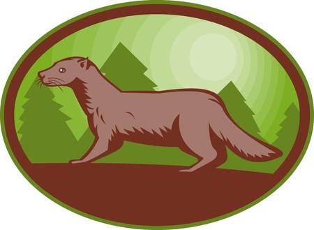 mink: illustration of a european mink side view set inside an oval. Stock Photo