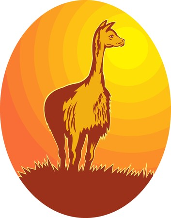 vicuna: illustration of a Vicuna standing with sun in background Stock Photo