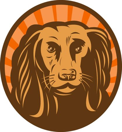 cocker spaniel: illustration of a Cocker spaniel head front view with sunburst in background set inside an oval