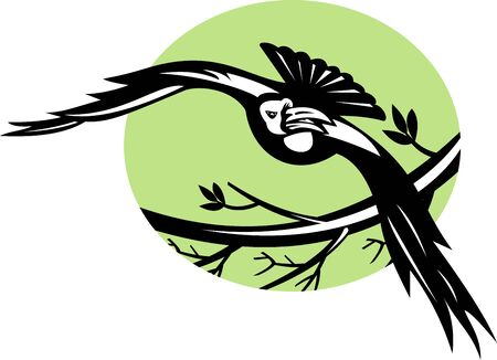 illustration of a Raven bird flying with branch illustration