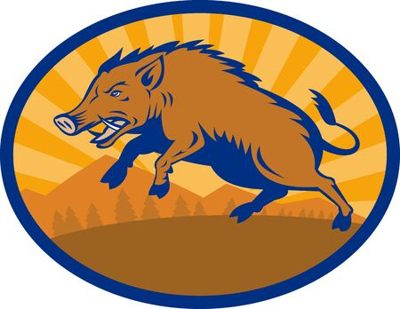 tusk: illustration of a Wild Boar Pig Razorback Hog attacking with landscape in background