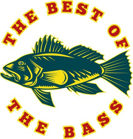 sea bass: illustration of a sea bass fish viewed from side with words the best of the bass done in retro woodcut style