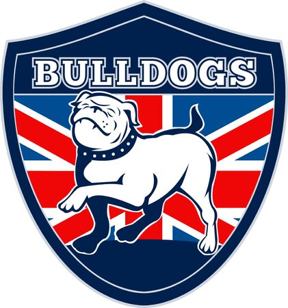 english bulldog: illustration of a Proud English bulldog marching with Great Britain or British flag in background set inside a shield with words bulldogs suitable for any sports team mascot Stock Photo