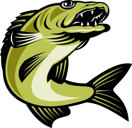 walleye: retro illustration of a walleye fish jumping isolated on white Stock Photo