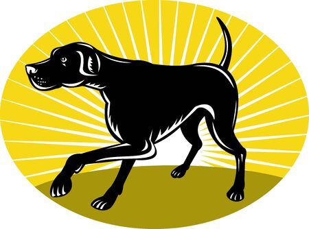 illustration of a Pointer dog with sunburst in background done in retro style set inside an oval. illustration