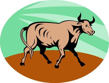 illustration of a Raging texas longhorn bull charging  illustration