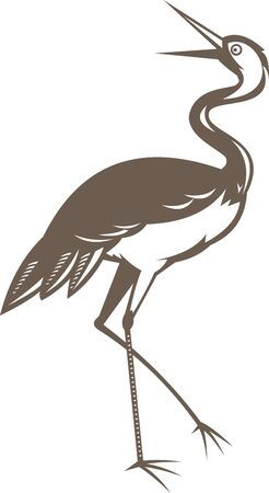 egret: illustration of a Crane  looking up done in retro woodcut style on isolated white background Stock Photo