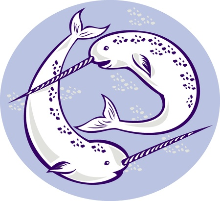 illustration of two narwhal Monodon monoceros unicorn whale witjh straight tusk tooth set inside oval done in retro style. Stock Illustration - 10066792