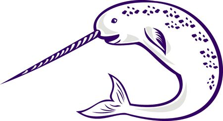 tusk: illustration of narwhal Monodon monoceros unicorn whale witjh straight tusk tooth on isolated white background