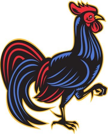 gallo: Ilustraci�n de un gallo Gallo marchando visto desde lado realizado en estilo retro grabado sobre fondo blanco aislado.