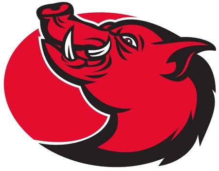 sanglier: illustration d'un cochon sanglier razorback t�te de porc sauvage avec grand c�t� faisant face d�fense sur fond blanc isol�