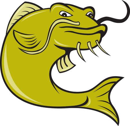 illustration of angry catfish done in cartoon style on isolated white background. illustration