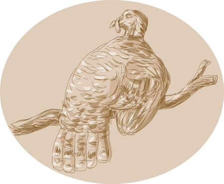 perching: Hand drawn sketch illustration of a wild turkey perching on branch viewed from rear.  Illustration