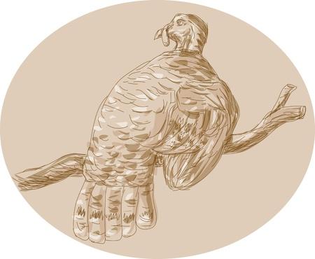 rúdon ülés: Kézzel rajzolt vázlat illusztráció egy vad pulyka rúdon ülés, elágazik Hátulról nézve. Illusztráció