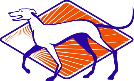 greyhound: Illustration of a greyhound dog walking viewed from side done in retro style  Illustration