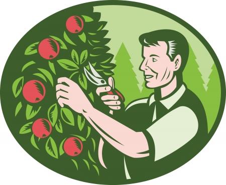 elipse: Ilustraci�n de un granjero horticultor de la fruta selector de la poda del �rbol de corte huerto de frutas hecho en estilo retro grabado conjunto dentro de una elipse