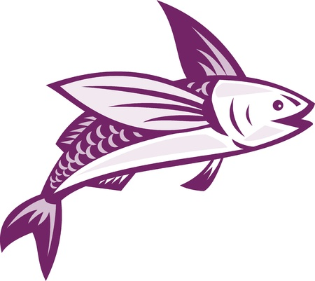 flying fish: Illustration of a flying fish done in retro style on isolated white background. Stock Photo
