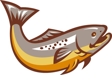 brown trout: Illustration of a trout fish jumping on isolated white background done in retro style.