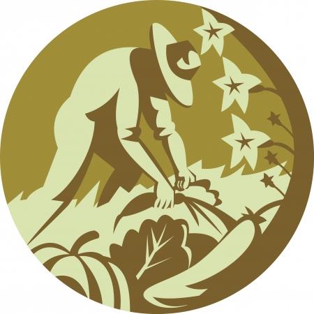 円内のレトロなスタイルを行う設定スカッシュ カボチャ キュウリ人参緑葉野菜を収穫、有機農家のイラスト。