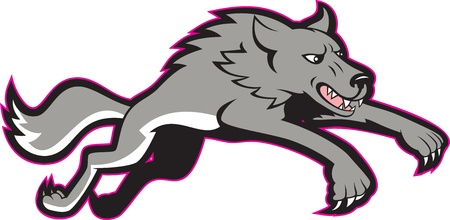 gray wolf: Illustration of a gray wolf jumping attacking done in cartoon style.
