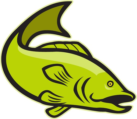 bass fish: Illustration of a largemouth bass fish jumping done in cartoon style on isolated white background.