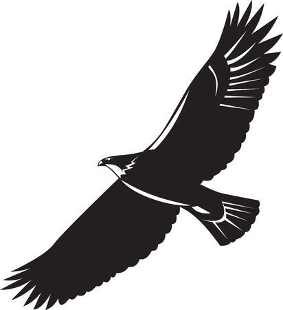 xilografia: Ilustración de un vuelo del águila calva alza en el fondo aislado hecho en estilo retro grabado en madera.