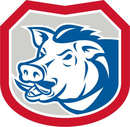 jabali: Ilustraci�n de un lado frente a la cabeza razorback jabal� jabal� cerdo establece dentro escudo protector en el fondo aislado hecho en estilo retro. Vectores