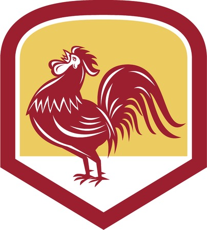 crowing: Illustration of a rooster cockerel crowing facing side set inside shield crest shape  done in retro woodcut style. Illustration