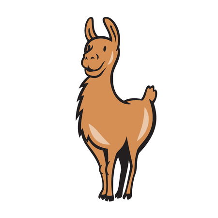llama: Illustration of a llama standing facing front done in cartoon style on isolated background.