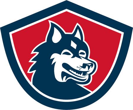 sled dog: Illustration of a Siberian Husky dog head set inside shield crest shape on isolated background done in retro style.