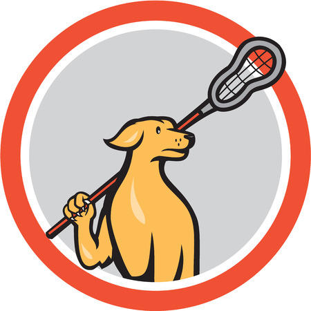 Illustration of a golden retriver dog lacrosse player holding a crosse or lacrosse stick viewed from front set inside circle done in cartoon style. Vettoriali