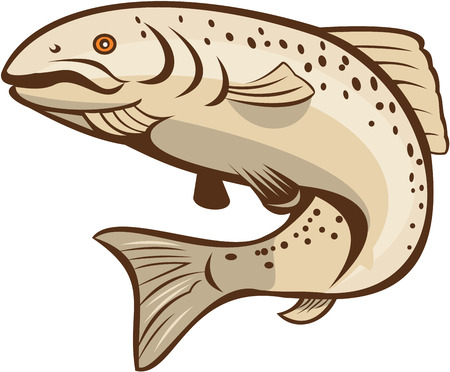 Illustration of a rainbow trout fish jumping on isolated white background done in cartoon style. Vectores