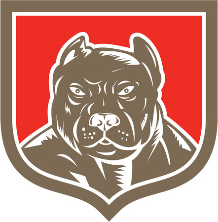 Illustration of a pitbull dog head facing front set inside shield crest on isolated background done in retro woodcut style. Vector