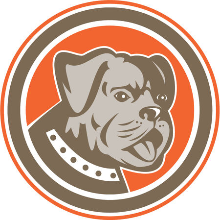 round collar: Illustration of a bulldog dog mongrel head mascot showing tongue set inside circle on isolated background done in retro style. Illustration