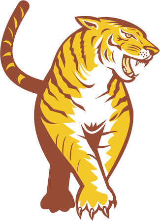 prowling: Illustration of an angry tiger prowling looking to the side viewed from front on isolated white background done in retro style.  Illustration