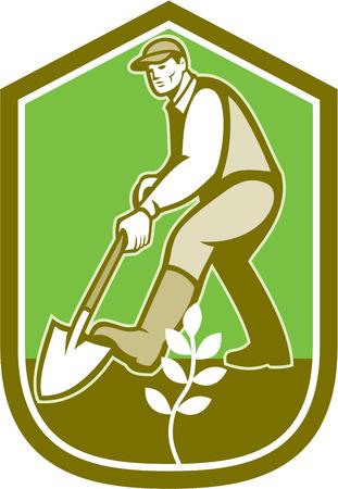 horticulturist: Illustration of male gardener landscaper horticulturist with shovel spade digging set inside shield crest on isolated background done in cartoon style.