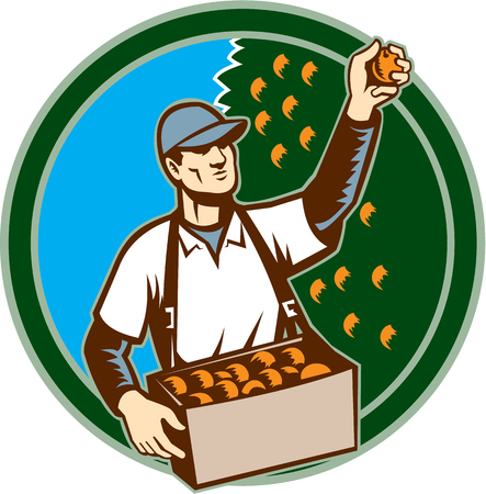 picking fruit: Illustration of a fruit picker fruit worker picking plum viewed from the front set inside circle shape done in retro style. Illustration