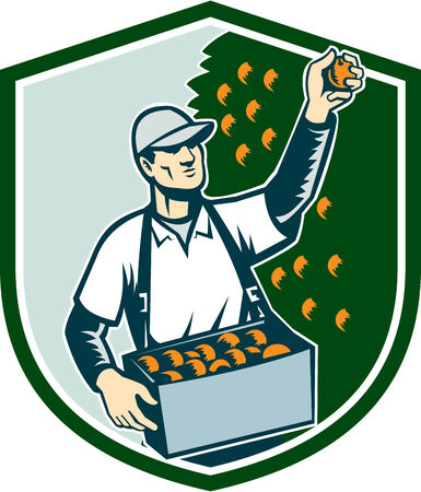 picker: Illustration of a fruit picker fruit worker picking plum viewed from the front set inside shield shape done in retro style.