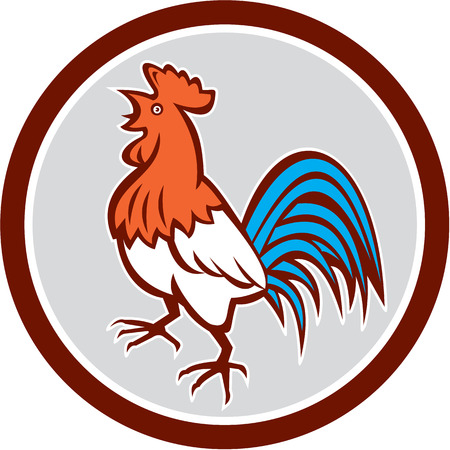 crowing: Illustration of a chicken rooster crowing looking up