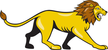 angry lion: Illustration of an angry lion