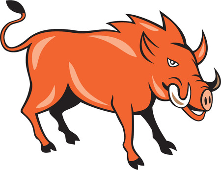 wild hog: Illustration of a wild pig boar razorback head