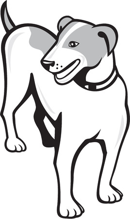 jack russell: Illustration of a jack russell terrier dog standing looking to the side set on isolated white background done in cartoon style. Illustration