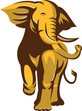 pachyderm: Illustration of an african bull elephant charging facing front on isolated white background  done in retro style.